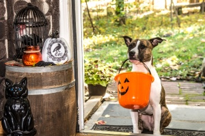Cute dog Trick-or-treating